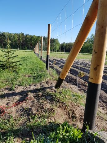 Ogrodzenia leśne, budowlane, tymczasowe ogrodzenie