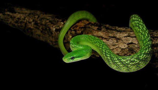 Змеи, приглашаем на фото сессию