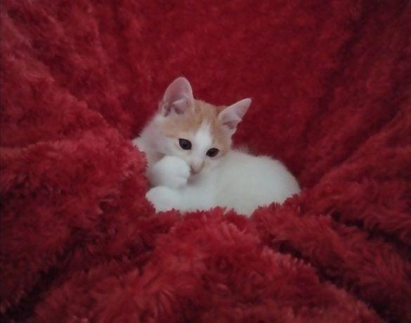 Ласковый котенок бесплатно в добрые руки