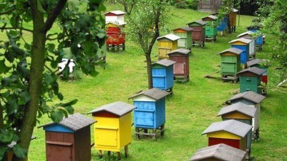 Пасіка вулики бджоли
