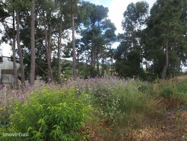 Terreno Rústico Carvalhal Benfeito Caldas da Rainha