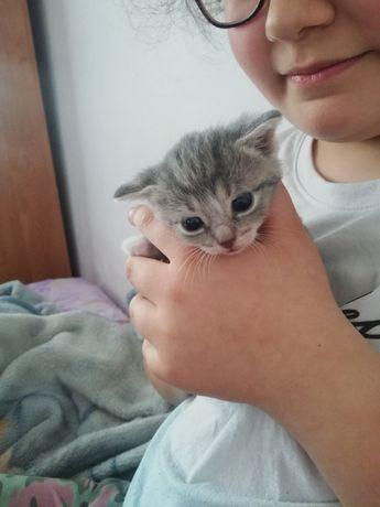 Witam oddam w dobre ręce Kotki 10 miesięczne zadbane i zdrowe