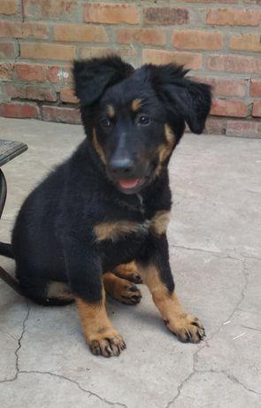 Отдам собаку в хорошие руки!!!