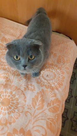 5000 гривен продаются кота