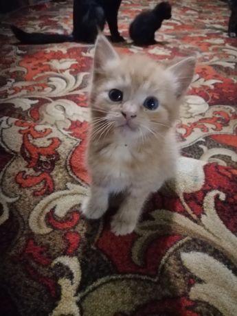 Котята в хорошие руки, очень ласковые и кушают все, привезем в любой р