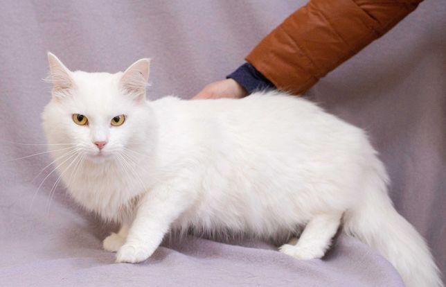 Самый обаятельный белый кот Оскар (1 год)