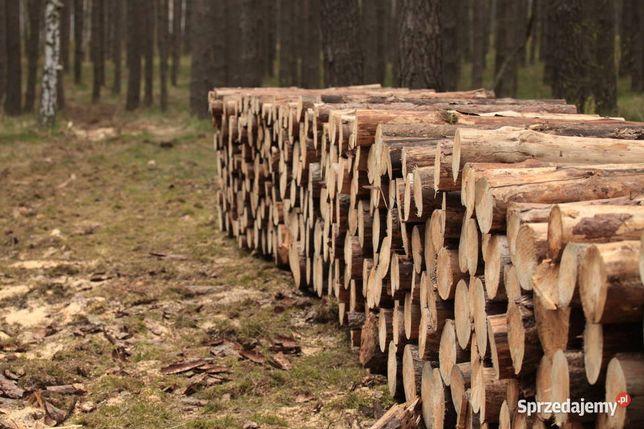 Drzewo Świerk Sosna Opał - Porąbane suche