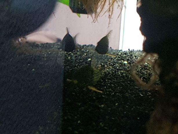 Peixes para aquário