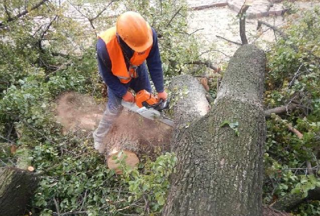 Спил деревьев и корчивания пней
