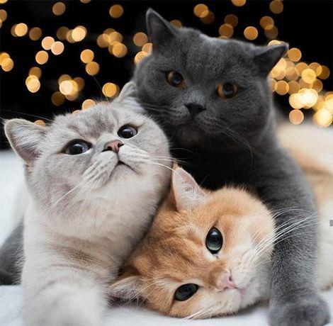 Передержка котов/кошек