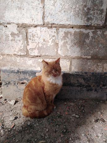 Кошечка ласковая 3 года