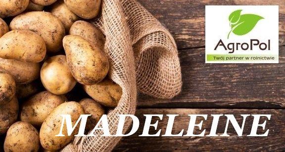 Ziemniak Sadzeniak MADELEINE Sadzeniaki Ziemniaka Sadzonki