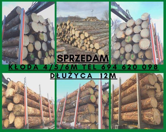 Drewno Tartaczne Świerk Sosna Jodła Modrzew Dłużyca Kłoda