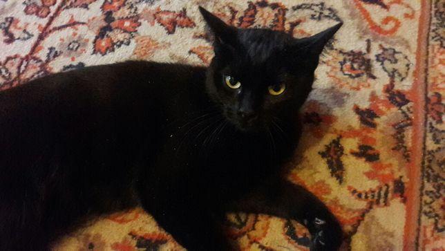 Кошка 2 месяца черная
