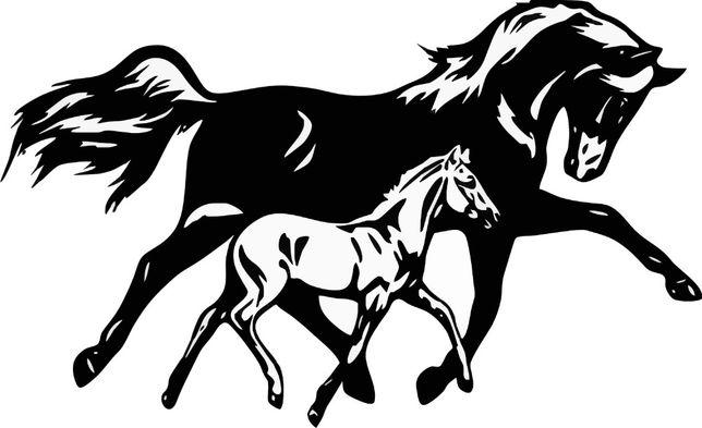 n573-naklejka koń źrebak klacz