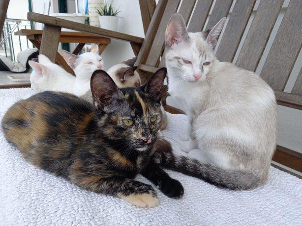 Gatos para adoção bebés