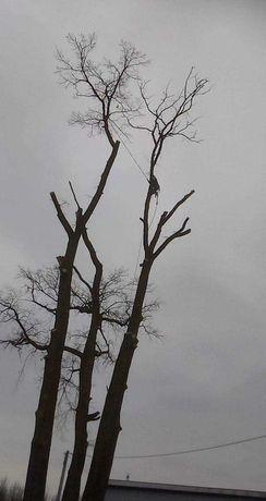 Wycinka trudnych drzew, obcinanie, rebakowanie, wywóz gałęzi