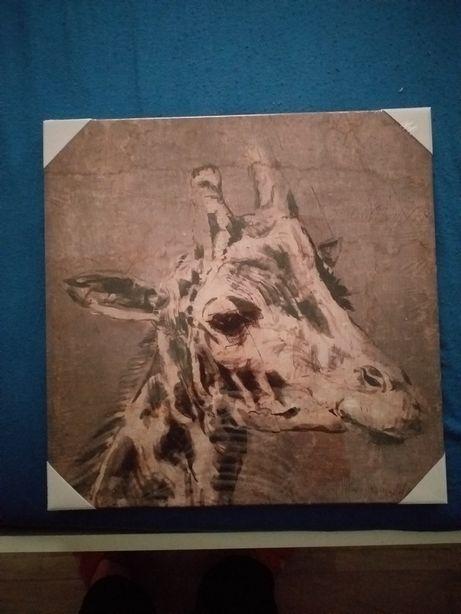 Obraz . Żyrafa  40x40