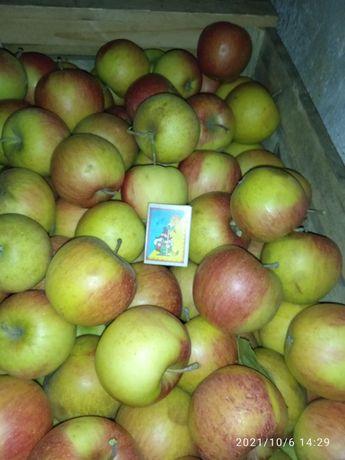 Продам оптом яблоко