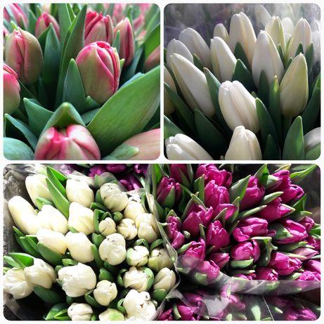 Tulipany z własnej uprawy