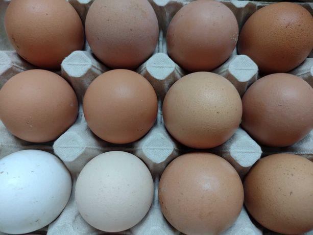 Jajka wiejskie,0,50 gr,możliwość dowozu