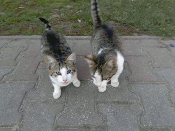 Młode kotki za darmo