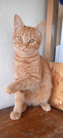 Кошечка живет с 10 котами. Тяжело выкормить. Ингулец