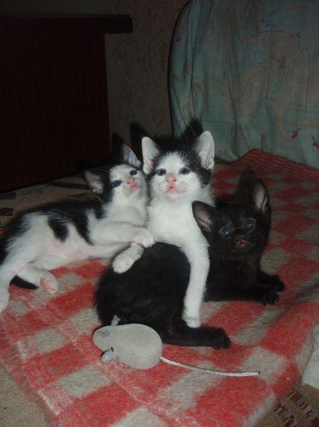 Домашние котята ищут новый дом и добрых хозяев.