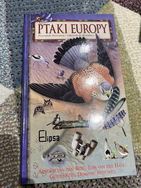 Ptaki europy ksiazka poradnik