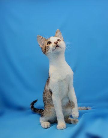 Котик Крекер (кот, котенок, котик)