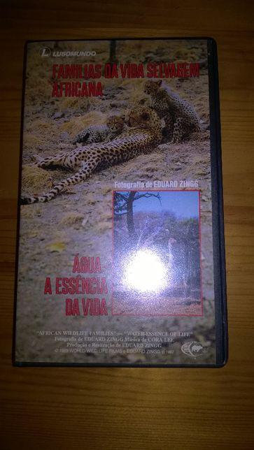 VHS - Famílias da Vida Selvagem Africana