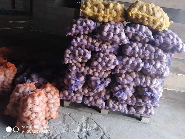 Ziemniaki bellarosa Gwiazda