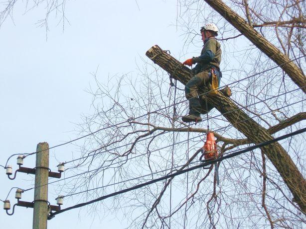 Валка дерев опасных аварийных