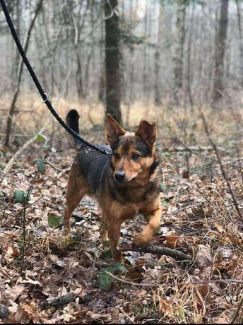 Poligon - z początku niepewny, ale cudowny pies!
