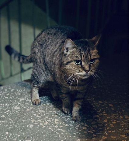 Найден кот, кошечка, Оболонь, ул Зои Гайдай, ручная, ест только корм