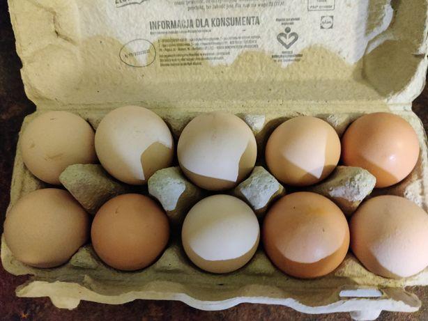 Jajka wiejskie domowe wolny wybieg