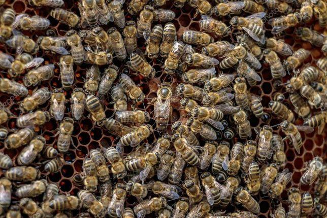 Rodziny pszczele 2019 z ulami