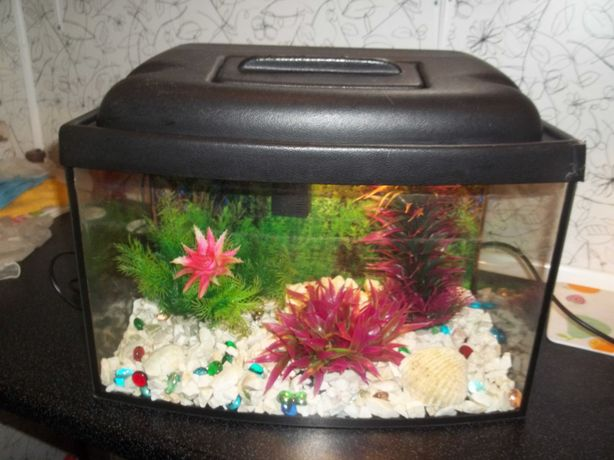 Akwarium- 30 l z filtrem