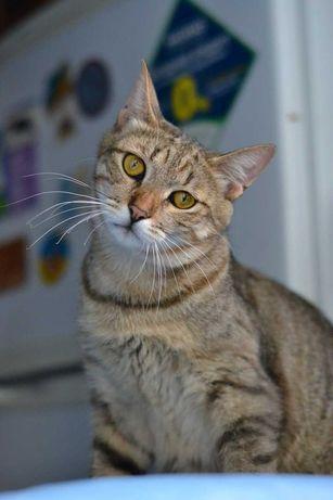 молоденький котичок смугастичок в пошуках домівки 1р
