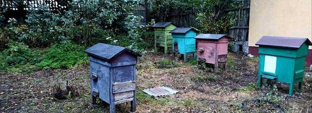 Sprzedam Pszczoły - Polecam