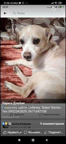 Пропала собака Шевчик