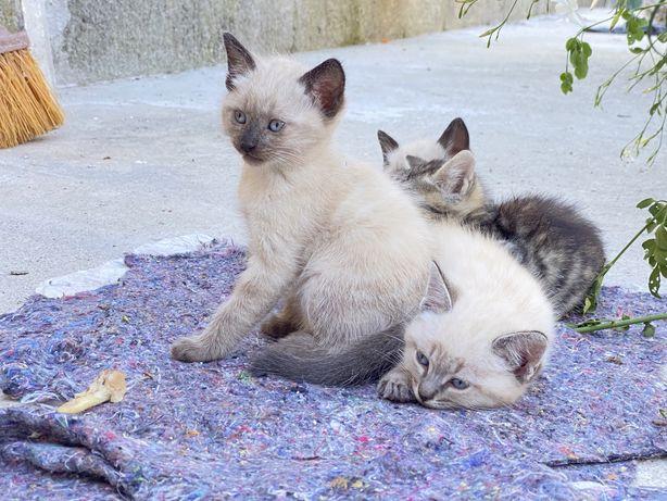 Gatinhos Lindos Procuram Nova Familia