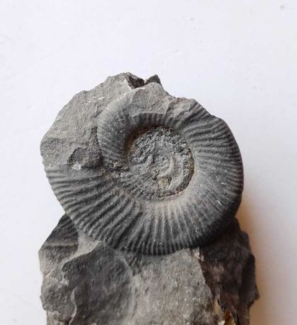 Caixa com 100 fosseis e minerais portugueses - fossil