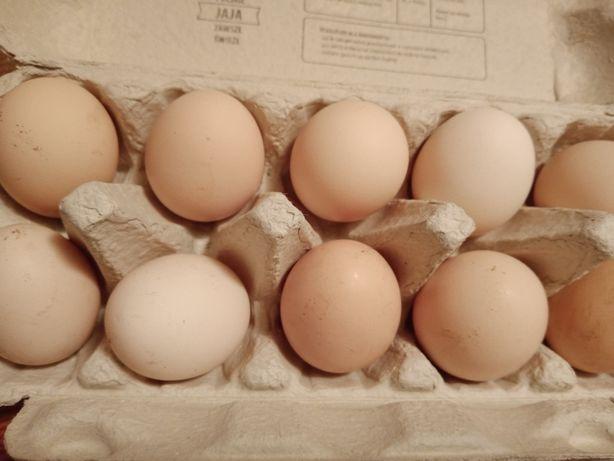 Jajka wiejskie prosto od kury
