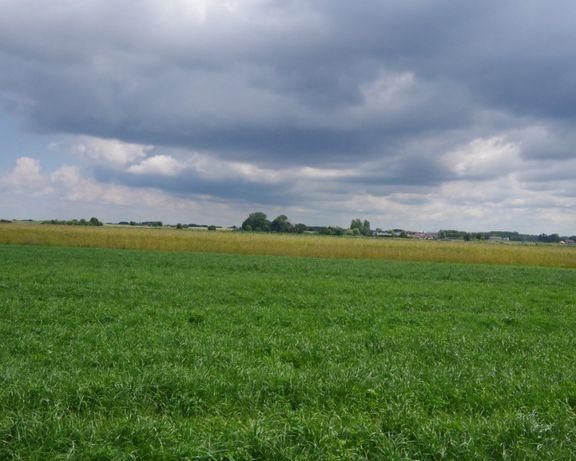 Sprzedam ziemię, działke rolna 3,22 Ha Skłudy gmina Obryte Pułtusk