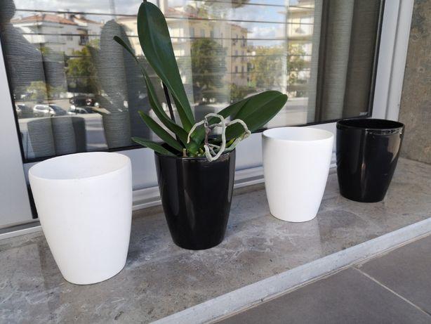 Vasos redondos orquídea 15 cm