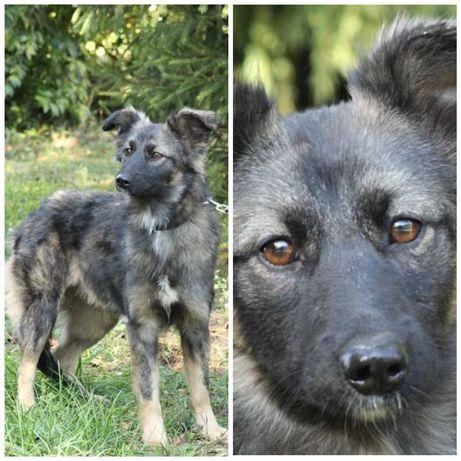 Пушистая красавица - собачка Мила, собака, небольшая, до 1 г