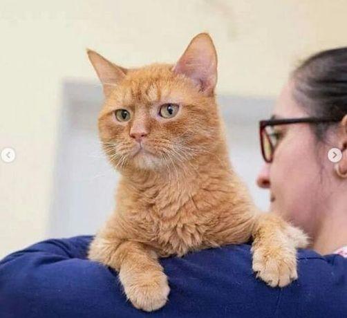 Котики ждут добрых людей Помощь приюту всегда плюсик в карму