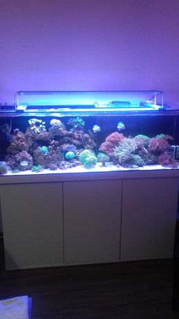 Akwarium morskie szkło
