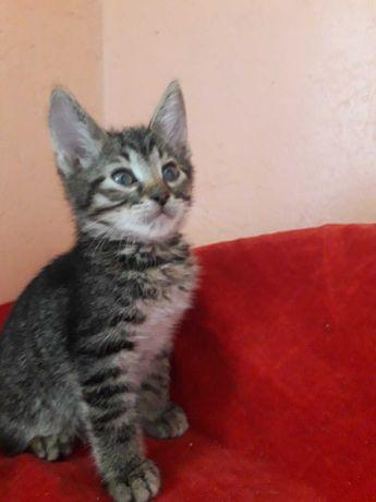 полосатенький котенок девочка